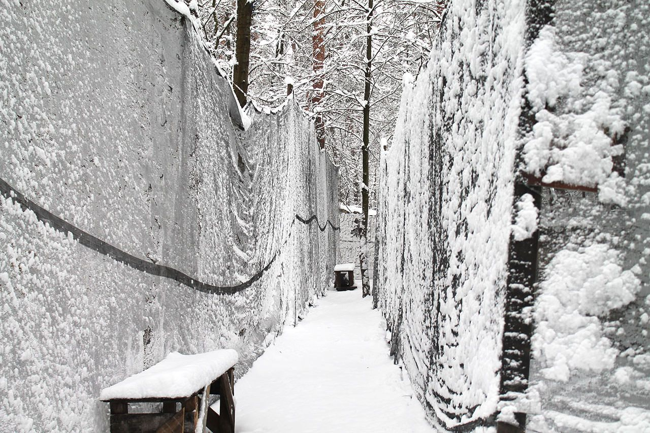 Зимние эскизы - фото 7